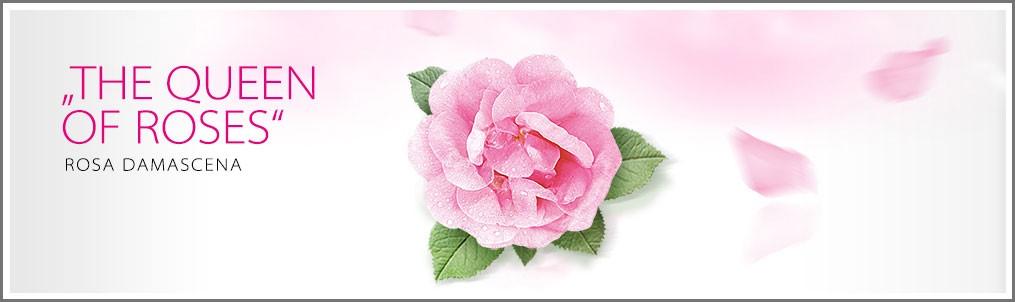 ¡TU ELIXIR DE BELLEZA!. La Rosa de Bulgaria, Damascena o de Alejandría,